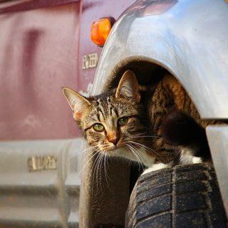 cat-1166155_640