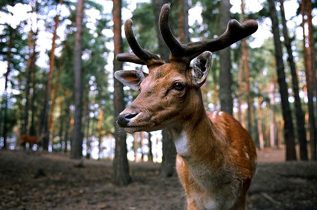Ставки сборов животного мира