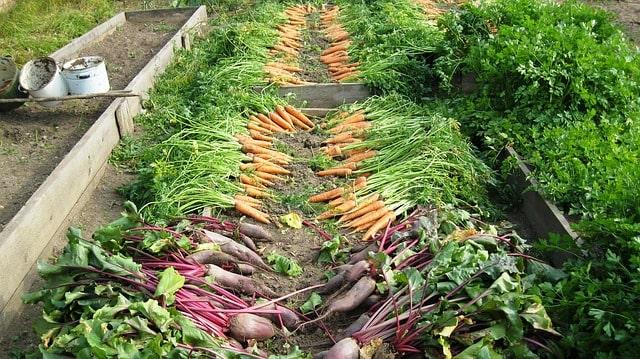 овощи огород