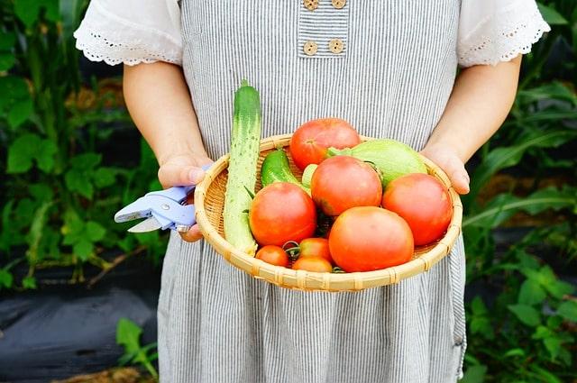 овощи урожай