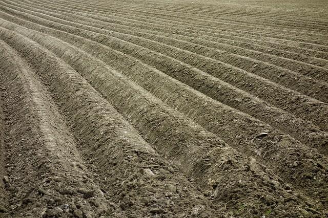 земля огород посадка картофель