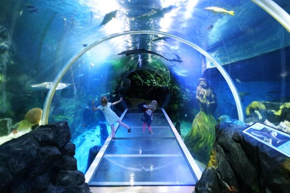 Бирмингем Национальный центр морской жизни