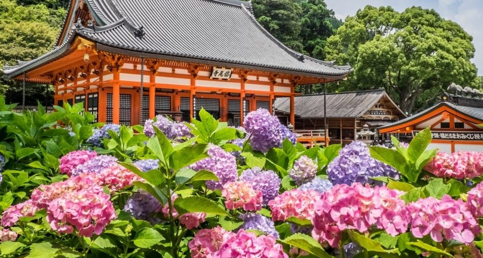 лето Япония